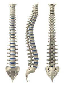 Articulations de la colonne vertébrale